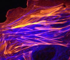 Cellular and Developmental Biology Research Cluster in the Molecular and Cellular Biology Graduate Program at UMass Amherst