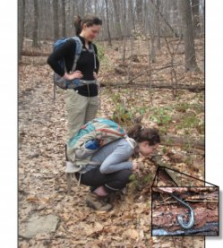 Intrepid OEB student Emily Fusco (right) shows fellow student Laura Doubleday (left) the lead back phase of the red back salamander, discovered inside a rotting log at Mt. Holyoke Range State Park.