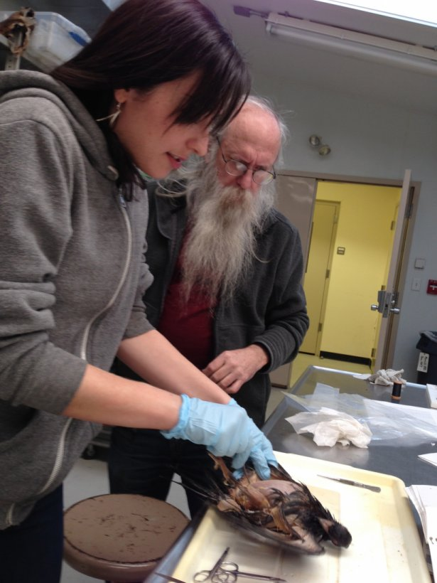 Avian Anatomy With Strauss And Richmond Organismic And