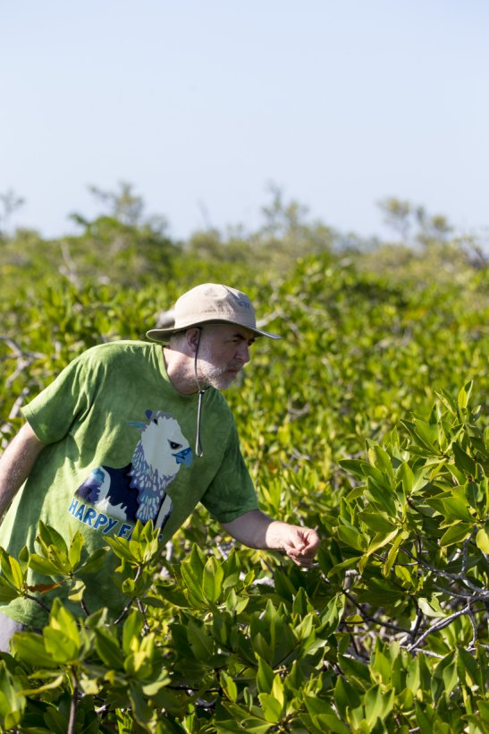 Adam Porter in the red mangroves