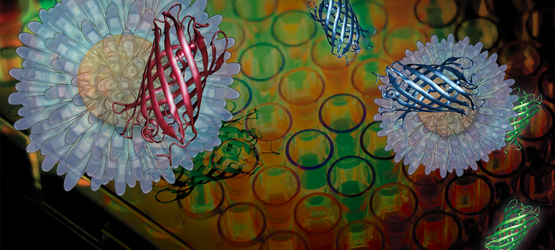 Biological Chemistry & Molecular Biophysics research cluster