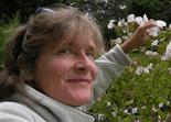Professor Anne Averill