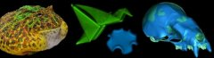 From left: A 3D model of a live horned frog captured with Beastcam technology; self-folded and shape-programmed hydrogels; a CAD-based model of a bat skull that can be changed to look like many different species. Images courtesy of the Duncan Irschick, Ryan Hayward and Betsy Dumont laboratories.