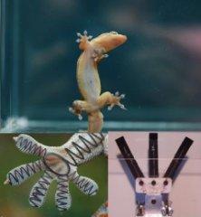 Gecko composite
