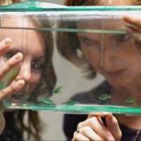 photo of Alicia Timme-Laragy with zebrafish