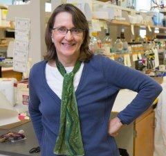 Professor Elizabeth Vierling