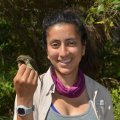 OEB PhD student, Mariamar Gutierrez, with a nano-tagged Northern Waterthrush